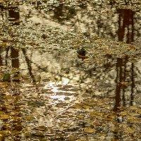Осень в луже :: Александр Синдерёв