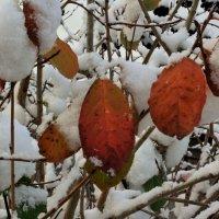 Осенне-зимний этюд :: Николай Масляев