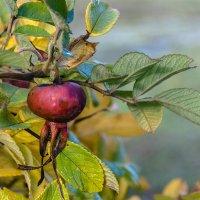 плоды поздней осени :: VL
