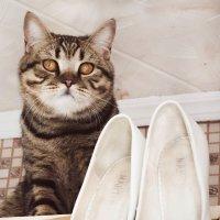 Без кота и свадьба не та! :: Ольга