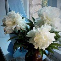 белые пионы :: венера чуйкова