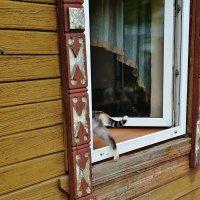 Погуляла кошка и домой в окошко . :: Святец Вячеслав