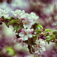 Spring :: Денис