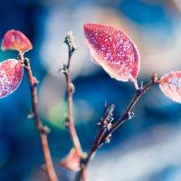 Ноябрьские краски :: Lika Shakhmatova