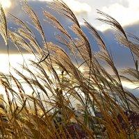 Осенние травы :: Марина Богданова