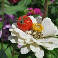 Полезные цветочки...)) :: Владимир Хиль