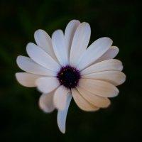 Цветок :: Ivan teamen
