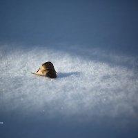 Зима. Одиночество :: Александр Синдерёв
