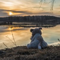evening at the lake in November :: Dmitry Ozersky