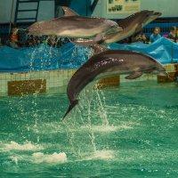 дельфины :: Евгений