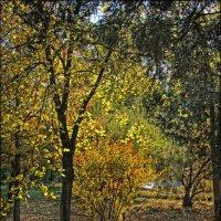 Осень... :: Сергей Порфирьев