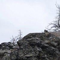 Камни и деревья :: Людмила Якимова