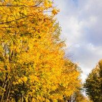 Осенний парк :: Екатерина Хотяшова