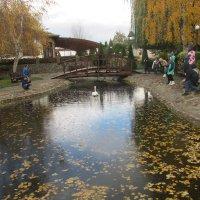 Осенний пруд :: Dana