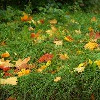 и падали листья... :: Татьяна Б.