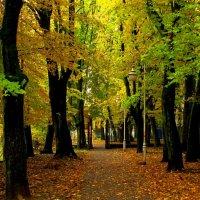 Осенние дорожки :: Сергей Карачин