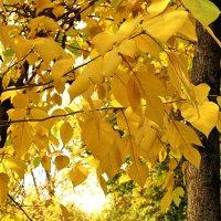 Солнечная осень :: Светлана