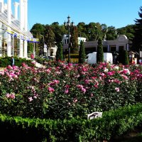 Кисловодск. Начало октября. Розы на Курортном Бульваре :: татьяна