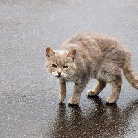 Ну не нравится ему такая погода. :: Татьяна Помогалова