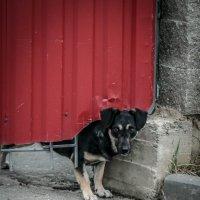 Осторожно, во дворе ... любопытная собака. :: Евгения Кирильченко