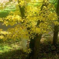 Солнечный октябрь :: Елена Семигина
