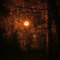 глубокая осень :: Руслан
