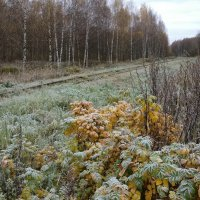 В морозном инее осеннего утра :: Николай Белавин