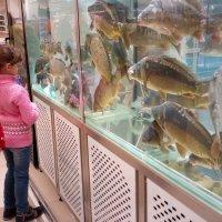 Рыбки в гастрономе... :: Serg