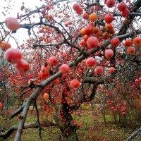 Эстафетацвета. Красный понедельник - удивительное дерево :: Наталья (ShadeNataly) Мельник