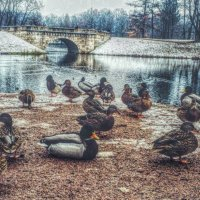 Прогулки по паркам! :: Натали Пам