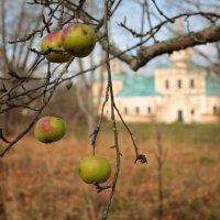 Яблочки :: ninell nikitina