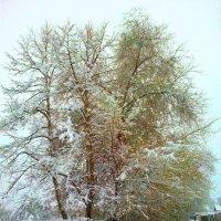 Снежное дерево :: Милла Корн