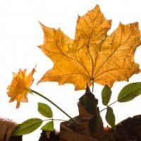 Осенний каламбур... :: Sergey Apinis