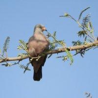 Croaking Ground -Dove :: чудинова ольга