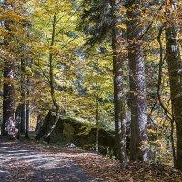Дорога в Алибекском ущелье... :: Аnatoly Gaponenko