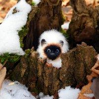Пора лесным зверушкам на зимовку..:) :: Андрей Заломленков