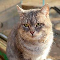 Про осенние кошачьи думы.. :: Андрей Заломленков