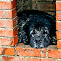В такую погоду хороший хозяин собаку из дома не выгонит. :: Михаил Столяров