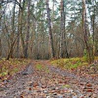 Лес в ноябре. :: Михаил Столяров
