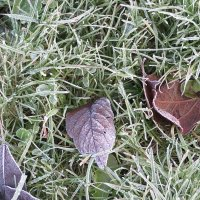 Ещё  вчера    было  морозное утро. :: Виталий Селиванов