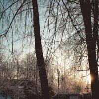скоро зима :: Ольга (Кошкотень) Медведева