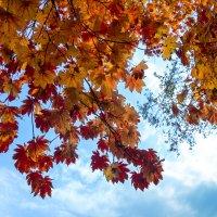 Осень :: Сергей Коваленко