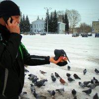 Алло .., прилетел .., кормится .., не переживай ! :: Мила Бовкун