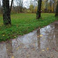 Я люблю эту осень из серых дождей...... :: Galina Dzubina