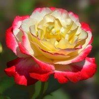 Царица цветов :: НАТАЛИ natali-t8