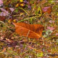 В осенней траве(вариант) :: Aнна Зарубина