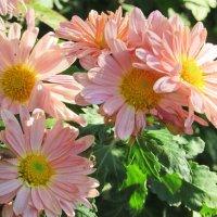 Осенние цветы :: mAri