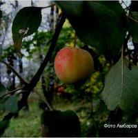 Дикая яблоня в городском парке :: Андрей