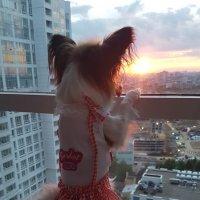 Любуемся закатом! :: Екатерина Саблина