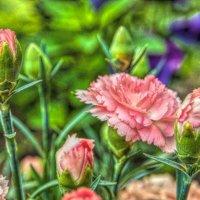 О цветах! :: Натали Пам